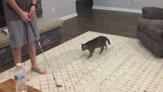 Cat makes an excellent caddy