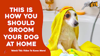 Top 4 Tips For Grooming Your Pet Dog At Home