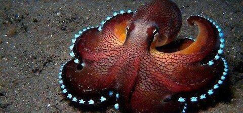 Insane Biology of Octopus