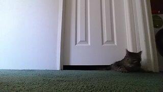 Kitty Wiggles his way under a Door