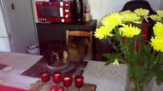 Kitties bonding