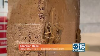 Got scorpions? Keep them away with Scorpion Repel and AVERZION!