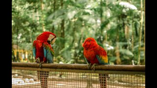 Beautiful birds are colorful and wonderful