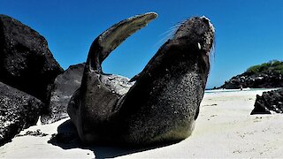 Sea lion tries to take an oceanside nap in the sunshine