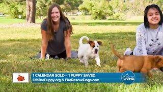 1 Calendar = 1 Puppy Saved // Lifeline Puppy Rescue