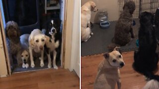 Most patient dogs ever know exactly when its time to eat