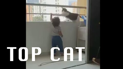 Clever Kitty