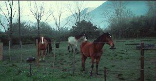 beautiful horses composing nature
