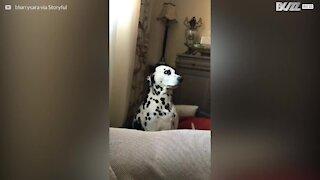 Les filtres Instagram n'ont aucun secrets pour ce chien