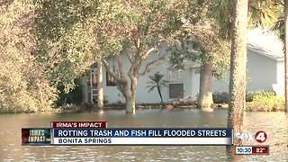 Bonita Springs submerged again after Irma