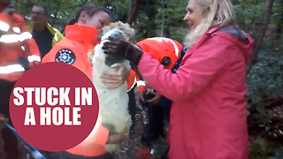 Jack Russell rescued from 9ft deep badger sett