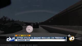 Kitten rescued after running across L.A. freeway traffic