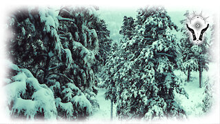 🌹 POSITIVE OUTCOMES DISTANCE HEALING SNOW PINE TREES NIGHT - RELAXING CALM MUSIC - via ANNA ROSA