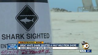 Great white shark spotted near Silver Strand