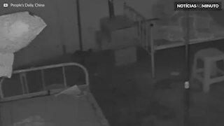 Assaltante é flagrado com máscara de papel higiénico
