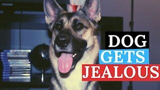 Vocal Dog Demands Attention /Gets Jealous