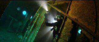 💗Diving seal under water animal scuba diving #12💗