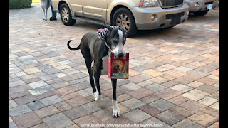 Great Dane delivers biscuits right to her bed