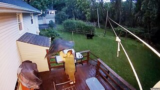 Bear-becue Scare! Woman Grilling On Bbq Forced To Flee After Huge Black Bear Appears In Garden