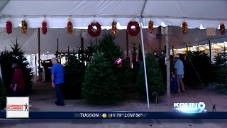 Tonto Forest to offer Christmas tree permits