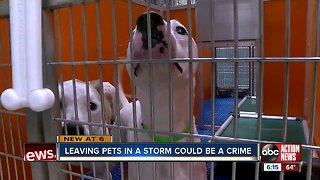 New bill could jail pet owners who abandon animals during hurricanes