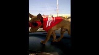 Clumsy Dog 🐶