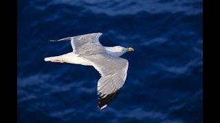 Feeding bird while flying