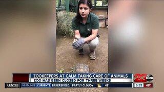 Impact of COVID-19 on CALM Zoo
