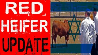 RED Heifer Bible Prophecy Update for March 2021