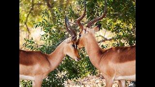 Wildlife Family