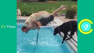 Try Not To Laugh Watching Funny Animal Fails Compilation part 1