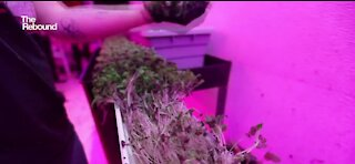 Microgreens making a difference across the country