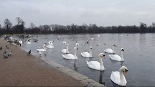 Swans Armada - Hyde Park | London