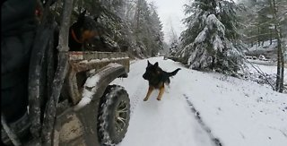 Doberman enjoys amazing day in snow covered mountains