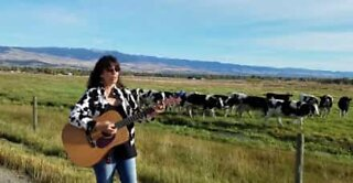 Woman leads a herd of cows with her singing