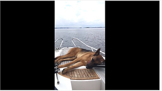 Dog takes nap during relaxing boat ride