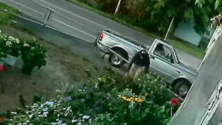 West Seneca police attempt to identify person accused of stealing plants from Mike Weber Greenhouses