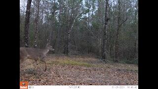 2021 Deer Cameras