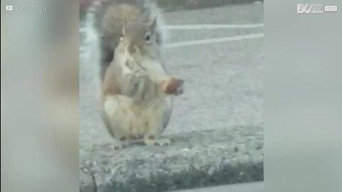 Esquilo visto a comer asa de frango em Rhode Island