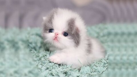 Cute kittens shocking expression best expression