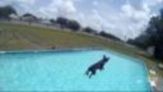 Dogs make splash in dock diving practice