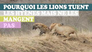 Voici pourquoi les lions n'aiment pas manger les hyènes