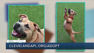Cleveland APL pet of the weekend: 4-year-old Zuri