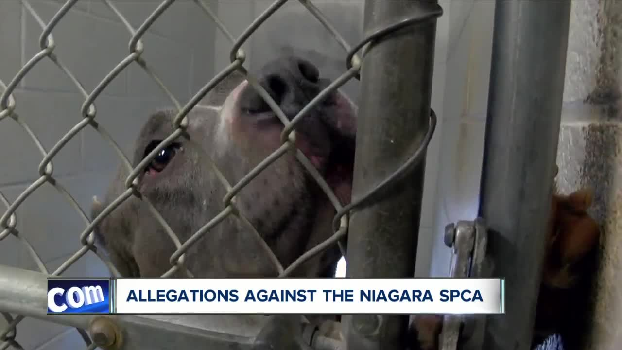 Allegations against the Niagara SPCA, is history repeating itself
