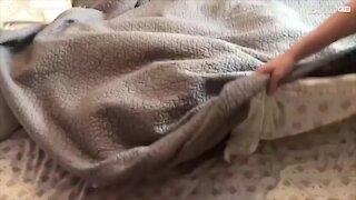 Chi c'è sotto le lenzuola? Tanti cagnolini!