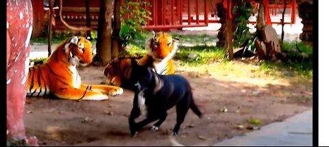 Prank dog & Fake Tiger funny Video