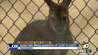 Safari Park prepares to open Walkabout Australia
