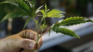 Coronavirus Hampers 2020 Marijuana Legalization Efforts