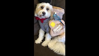 Dog and parrot get ready for Halloween