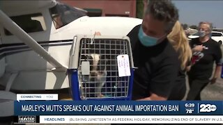 Marley's Mutts speaks out against animal import ban